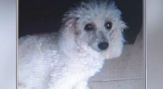 Família oferece recompensa para quem ajudar a encontrar cadela