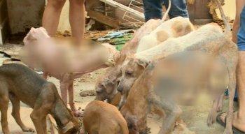 Ao todo, cerca de 30 cães foram resgatados