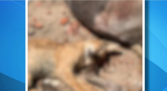 Vários animais domésticos são encontrados mortos em Caruaru