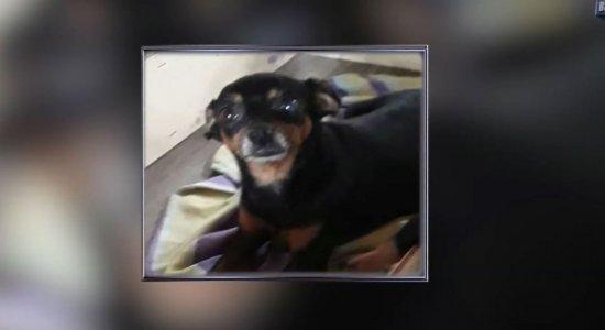 Família oferece recompensa para encontrar cadela roubada em Paulista