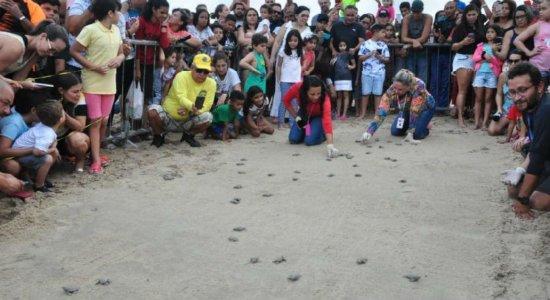 Praia do Janga recebe nascimento de leva de tartarugas