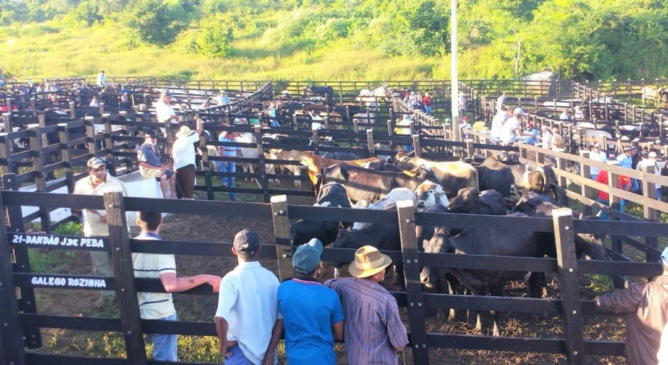 Prefeitura de João Alfredo suspende feira de gado