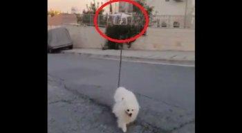 É possível observar que o rapaz prendeu a coleira do animal em um drone