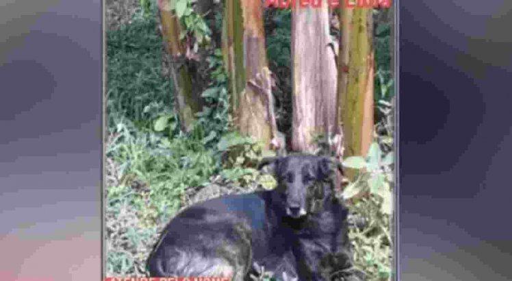 Cadela perdida em Abreu e Lima