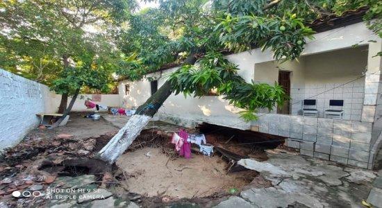 Árvore cai e atinge casa enquanto família dormia em Olinda