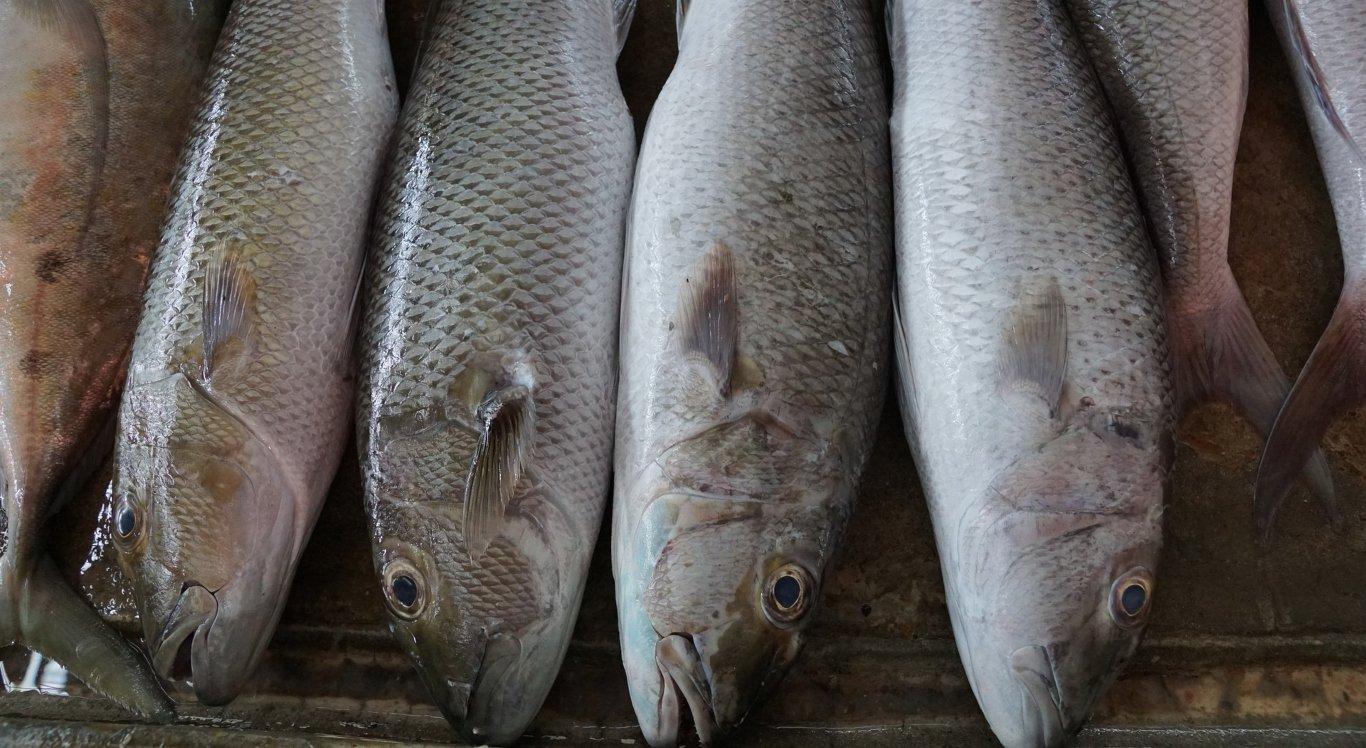 MPPE recomenda suspensão da distribuição de peixes em Vicência