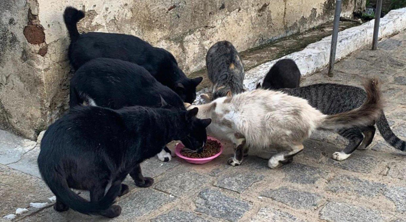 Grupo distribui ração para animais de rua durante a pandemia