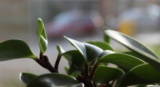 Começando a cultivar plantas em casa? Confira dicas