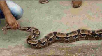 Nesta época, as cobras costumam se locomover mais e são atraídas para locais com mato e lixo, onde há presença de roedores.