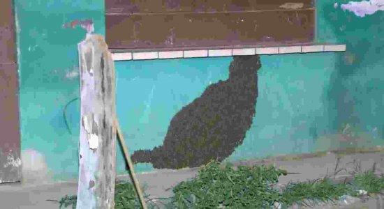 Moradores de Olinda estão assustados com invasão de abelhas