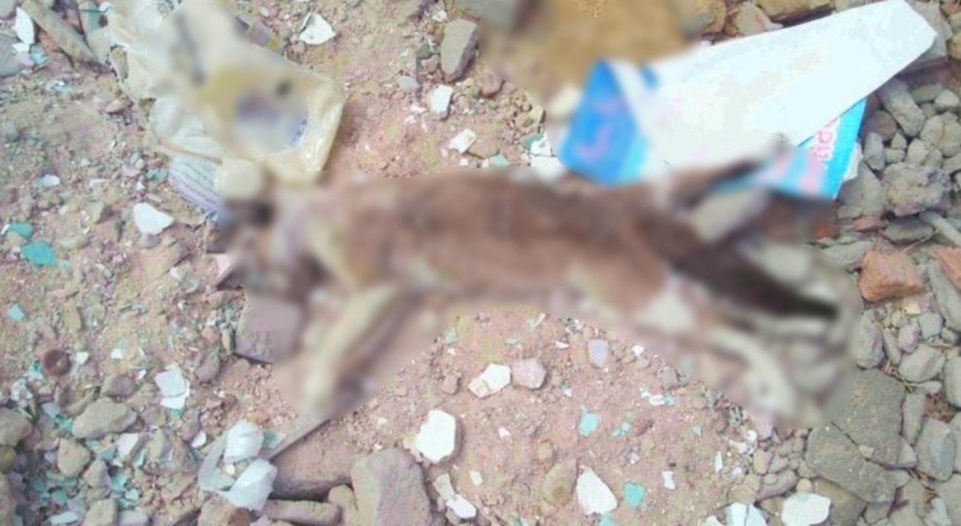 Polícia investiga envenenamento de gatos em Petrolina