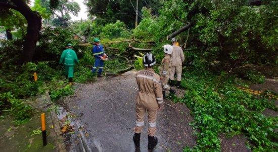 Chuvas causam alagamentos e queda de árvore no Grande Recife