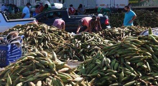Mão de milho varia entre R$ 20 e R$30 em plantão de São João no Ceasa