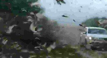 Nuvem de gafanhotos na América do Sul