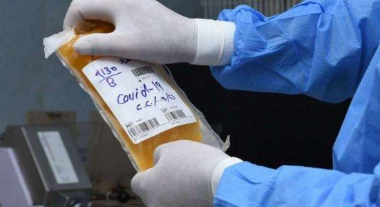 Em Pernambuco, plasma de pessoas curadas da covid-19 será usado em pacientes graves