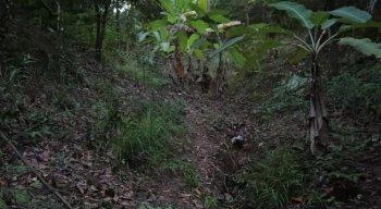 O corpo da mulher foi encontrado em uma mata no município de Paulista