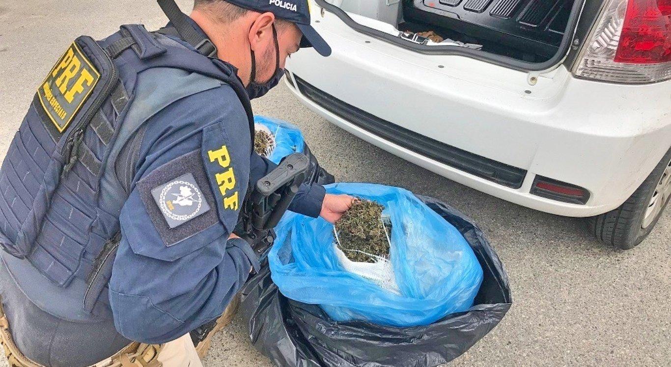 Polícia apreende mais de meia tonelada de drogas durante operação