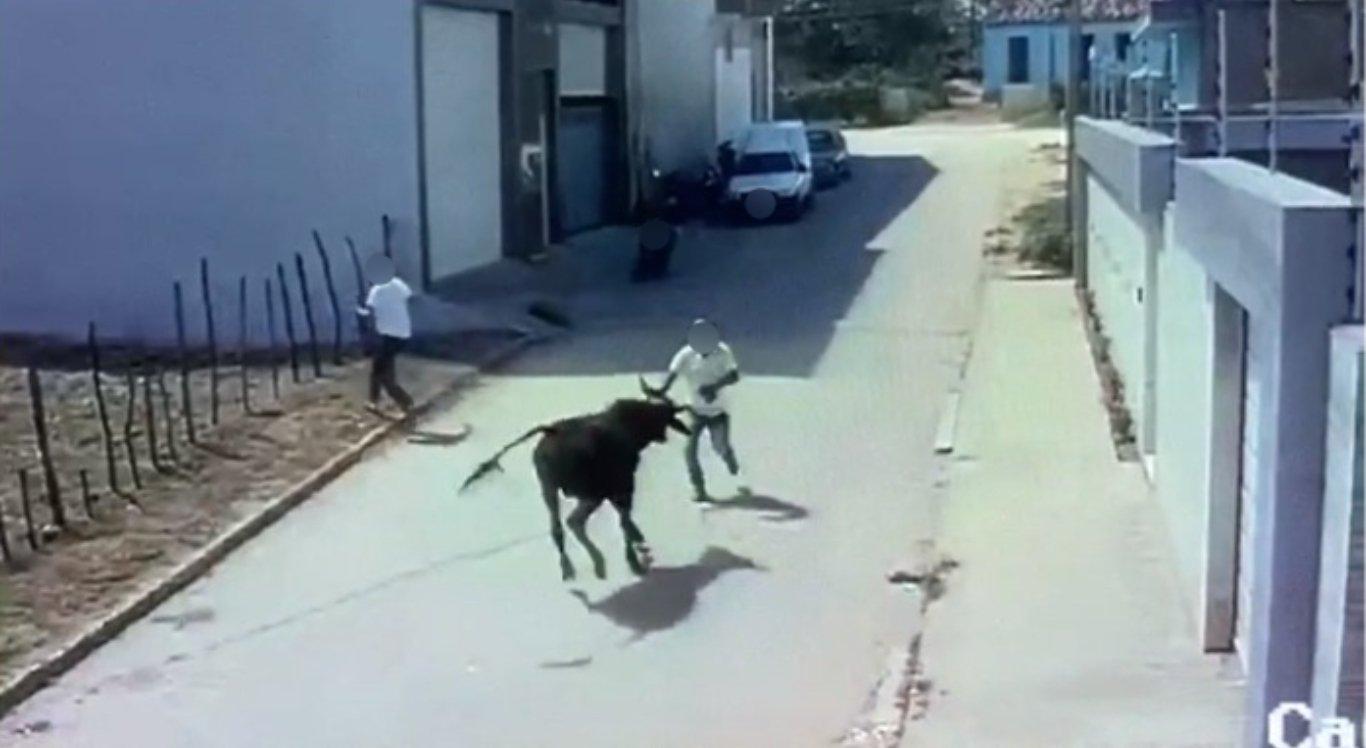 Homem morreu após ser atacado por boi