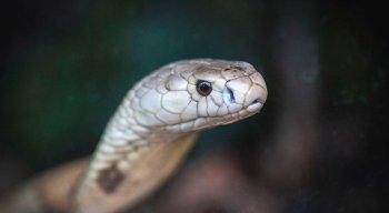 Operação Marraquexe desarticula organização criminosa que fazia tráfico internacional de animais silvestres, exóticos e em extinção, no Amapá