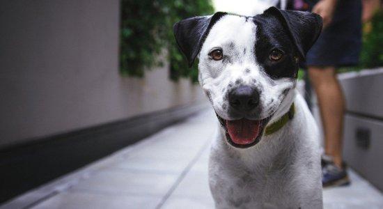 Sancionada lei que aumenta pena para maus-tratos a animais