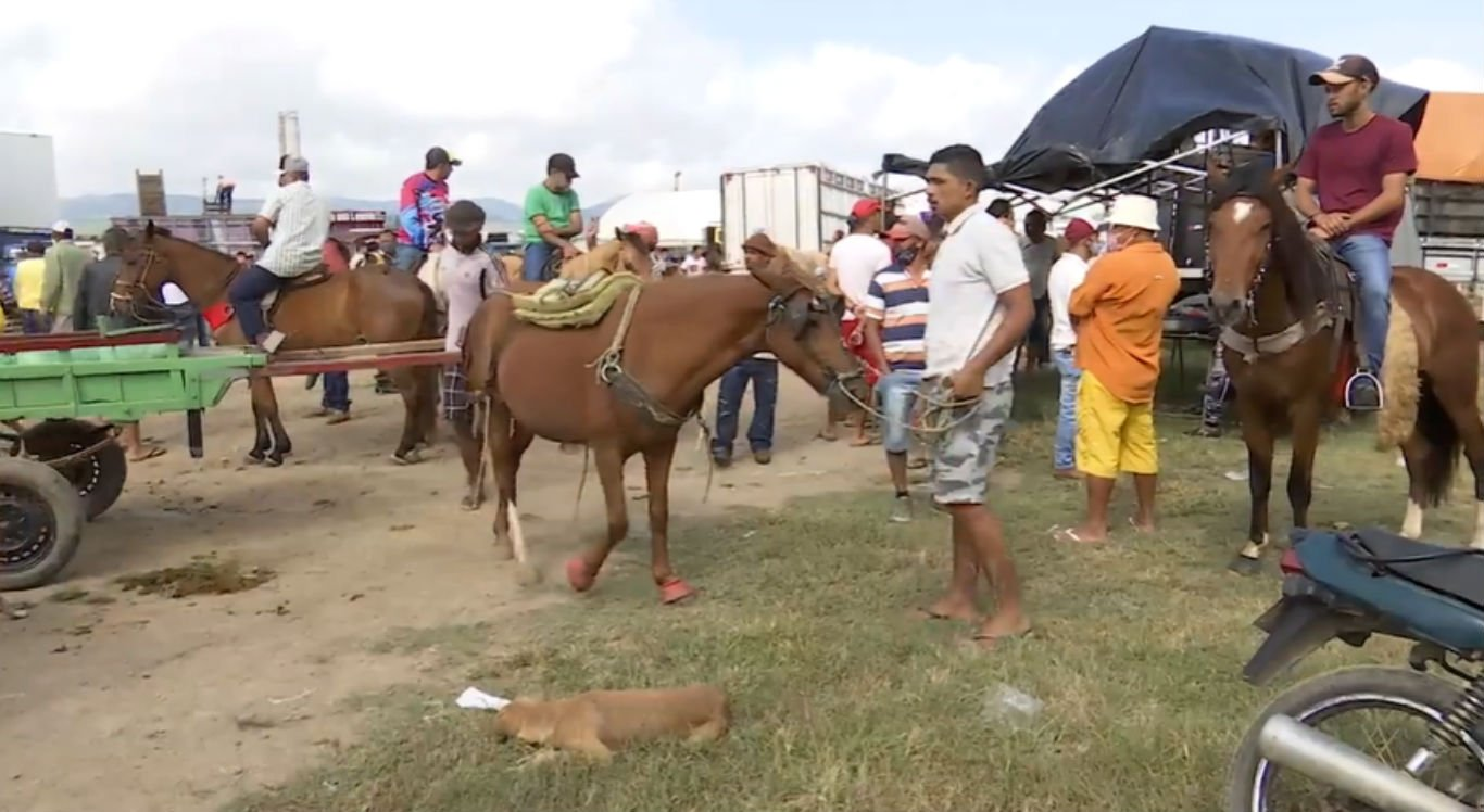 Feira de cavalos ocorre nas proximidades da Feira de Gado