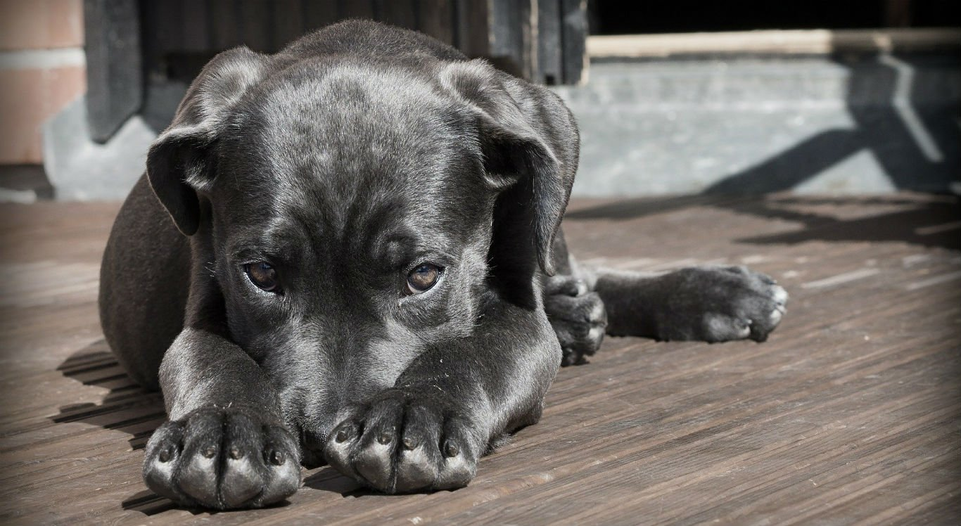 Lei prevê multas para donos de animais que façam barulho