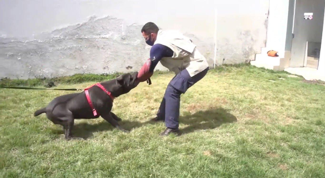 Cães adestrados são mais disciplinados