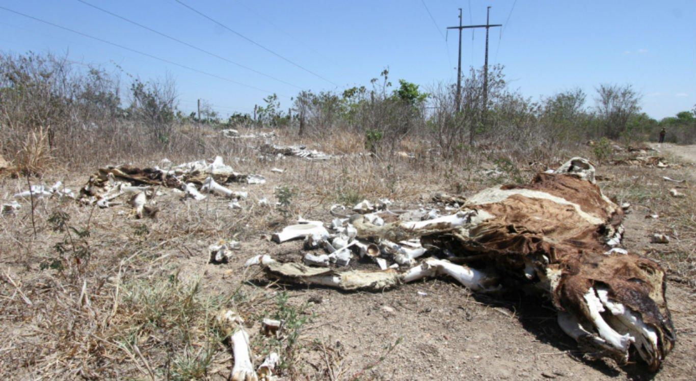 Seca castiga cidades do interior pernambucano