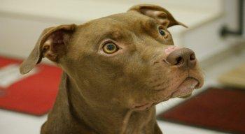 Pitbull teria subido no sofá, o que irritou o agressor