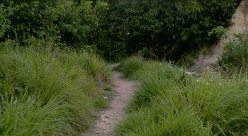 O matagal fica atrás da Upa da Avenida Caxangá, na Zona Oeste do Recife