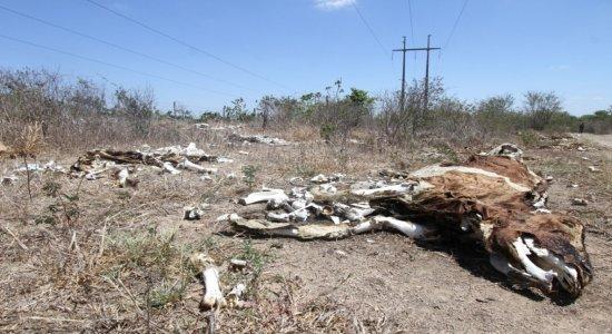 Estiagem no Agreste deixa 59 municípios de Pernambuco em situação de emergência; veja quais