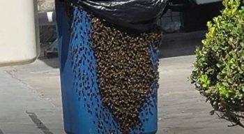 Enxame de abelhas assusta moradores de Petrolina, no Sertão de Pernambuco