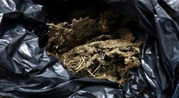A droga foi apreendida dentro de um caminhão baú