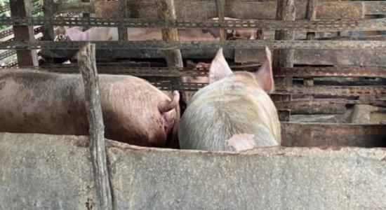 Após denúncia de barulho de animais sendo mortos, polícia fecha matadouro ilegal em Abreu e Lima