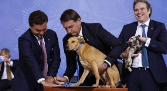 Governo publica lei que aumenta penas de maus-tratos contra cães e gatos