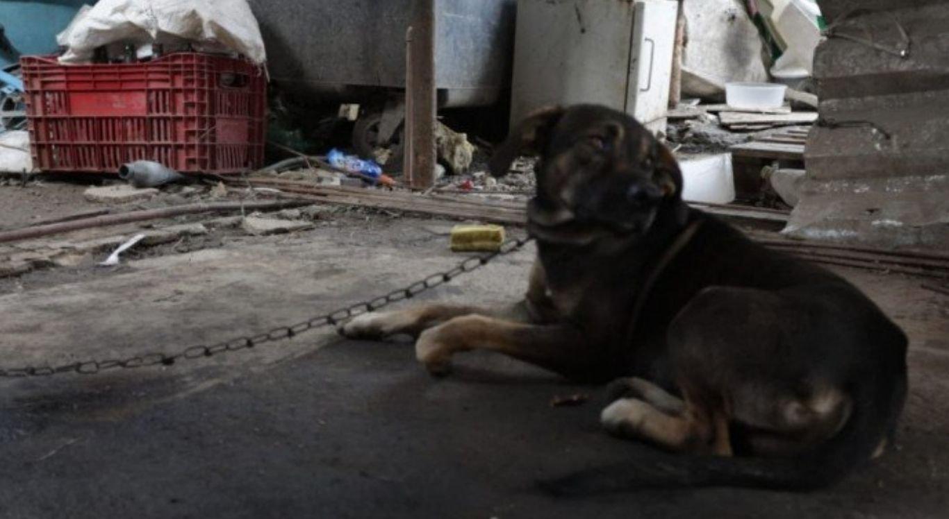 A vítima foi até a um ferro velho levar ração para o cachorro, quando pisou em um fio de extensão desencapado