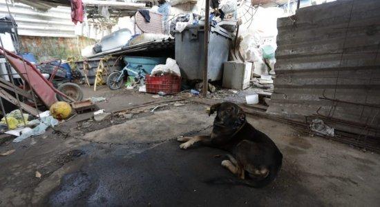 Mulher morre eletrocutada após levar comida para cachorro de rua em ferro velho