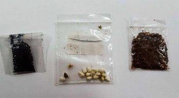 Análise mostra que sementes não solicitadas vindas de países asiáticos têm fungos e bactérias