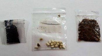 Um total de 258 pacotes contendo estes tipos de sementes foram encaminhados à pasta pela população