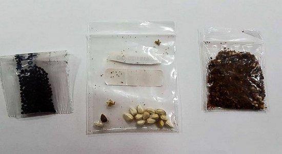 Governo alerta população a não abrir pacotes de sementes não solicitadas