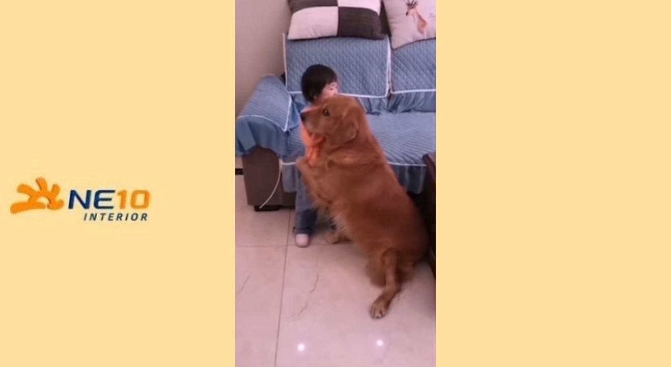 Menina é consolada por golden retriever