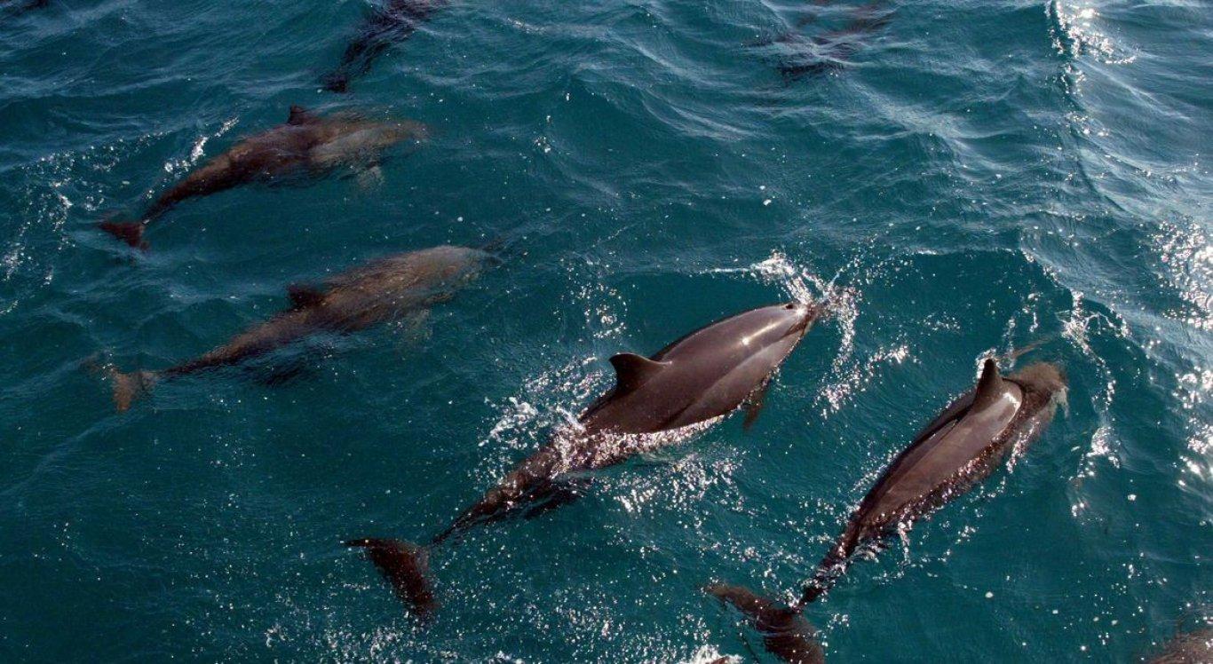 Pesquisa teve como base a indústria de delfinários, que envolve a exibição de golfinhos e outros mamíferos marinhos