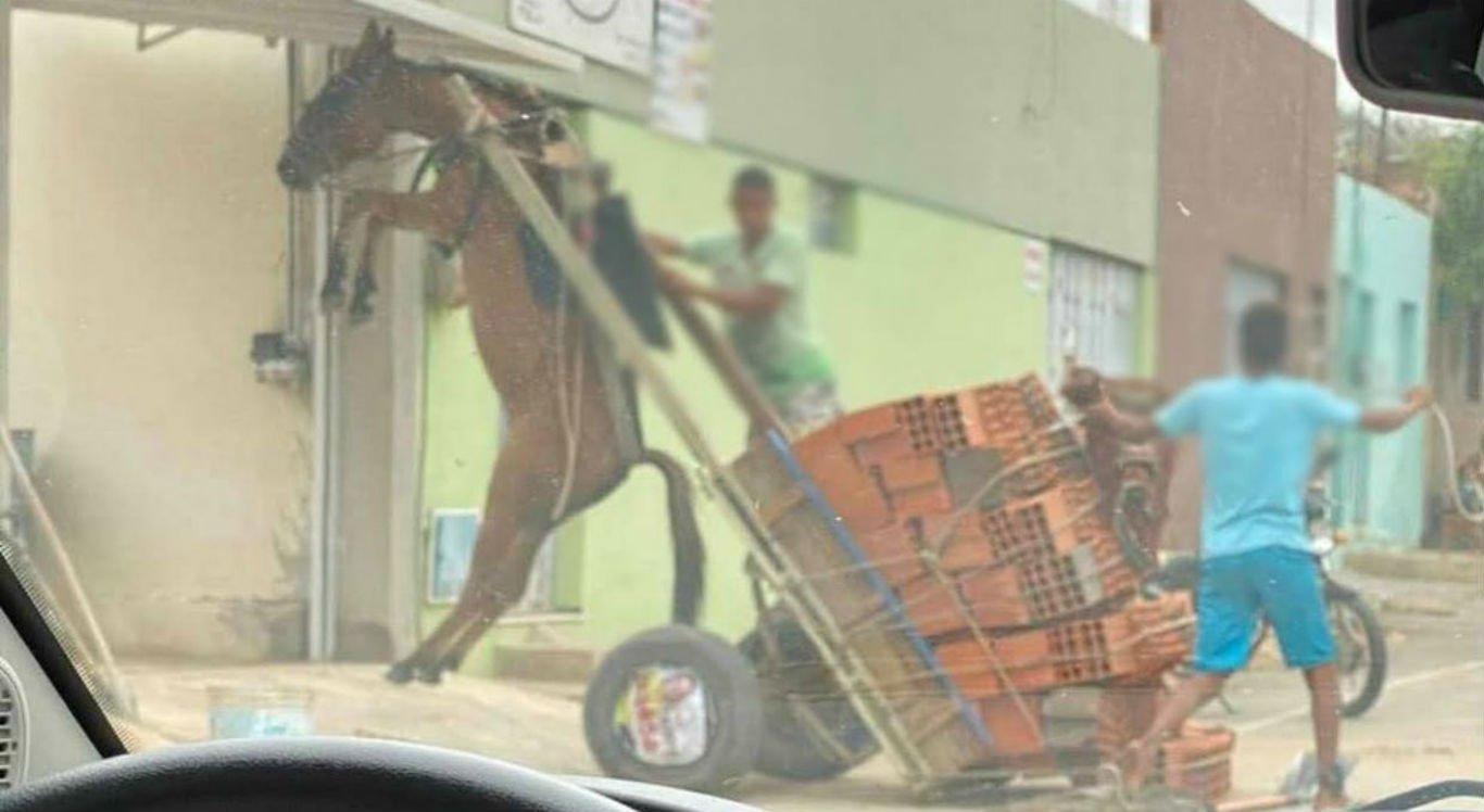 Burro ficou suspenso por causa do peso da carroça
