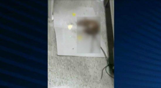 Denúncia de falta de higiene no Hospital Otávio de Freitas e flagra de ratos e gato nos corredores