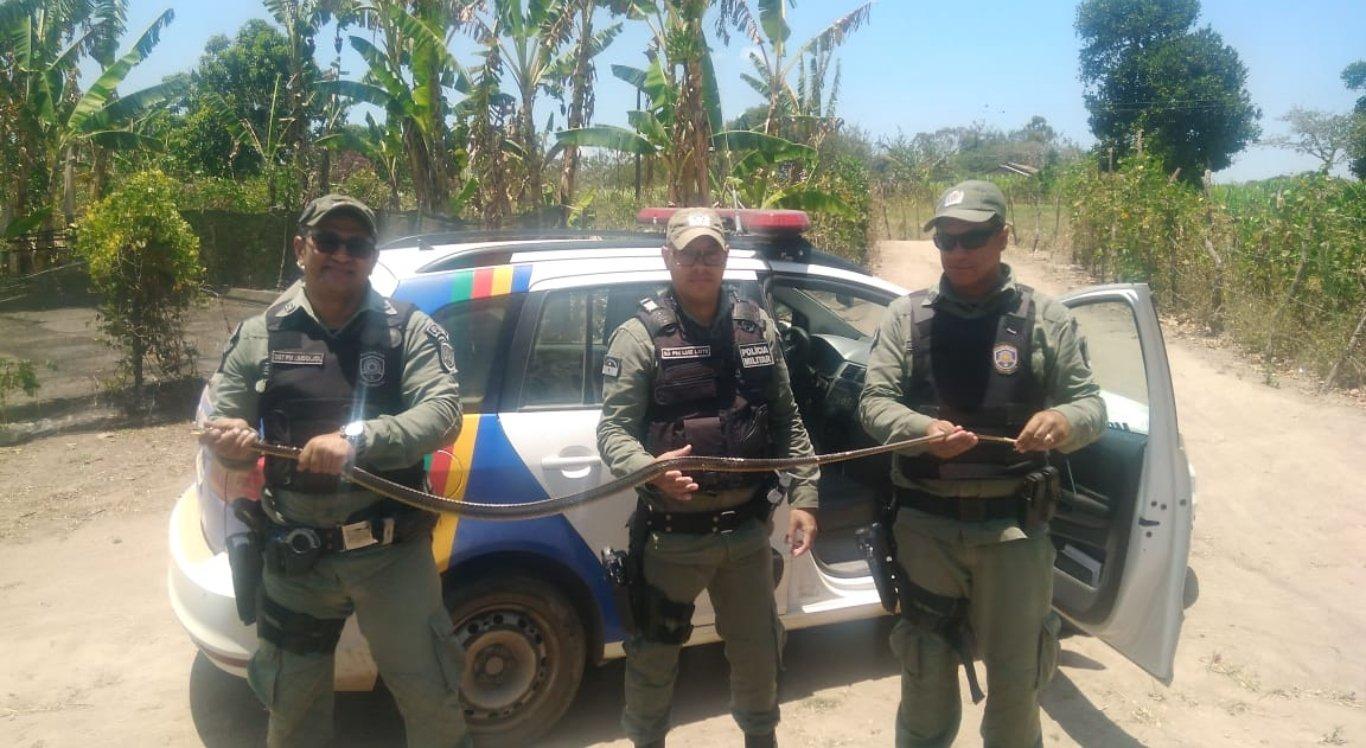 Polícia resgata cobra peçonhenta no Agreste de Pernambuco
