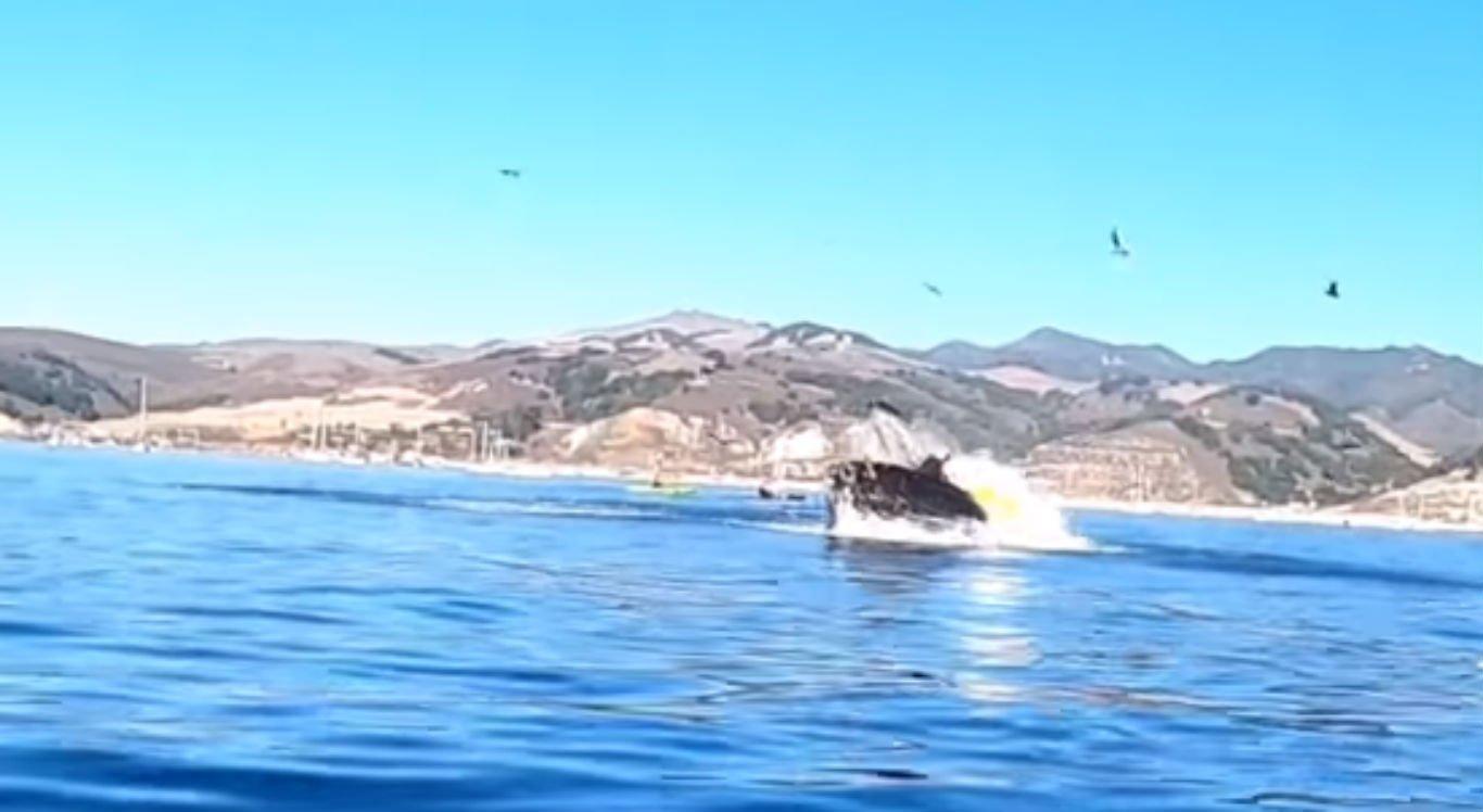Baleia jubarte derruba mulheres em caiaque