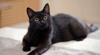 Os amantes de felinos sabem que gatos são super companheiros e não dispensam uma troca de carinho