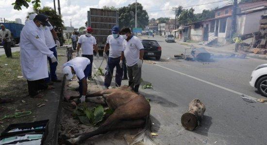 Acidente envolvendo carro e três cavalos deixa trânsito complicado na PE-05
