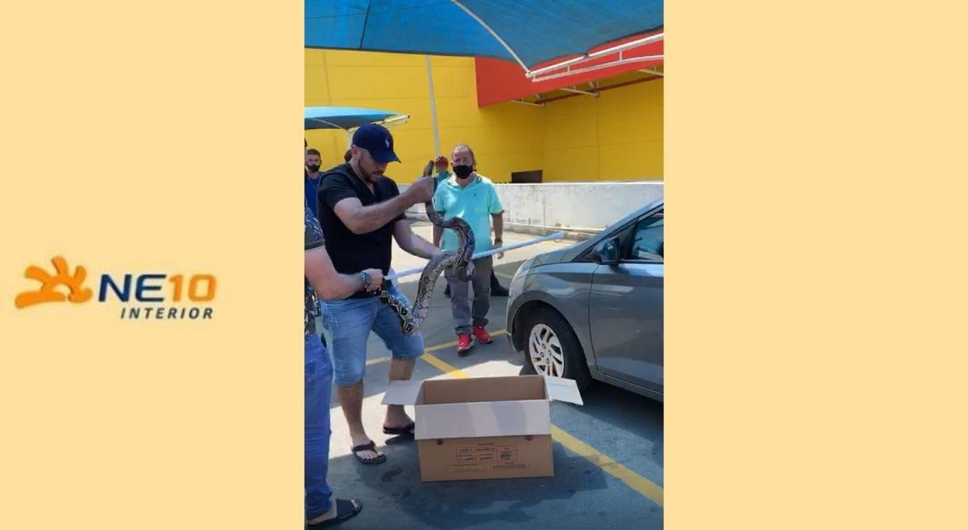 Cobra foi colocada em uma caixa por pessoas que estavam no local