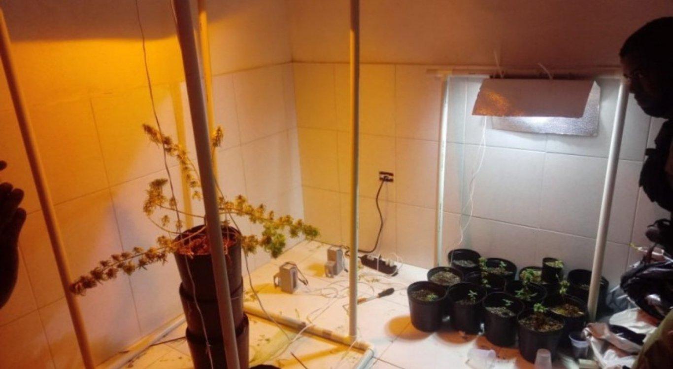 Homem é suspeito de cultivar supermaconha em casa